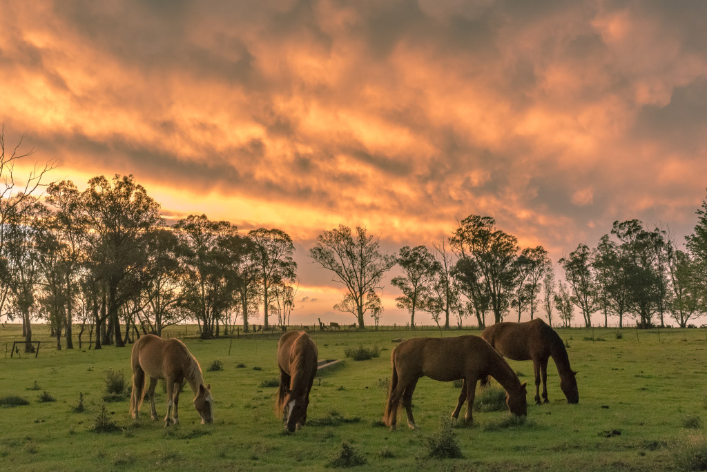 Horses, sunset, favourite