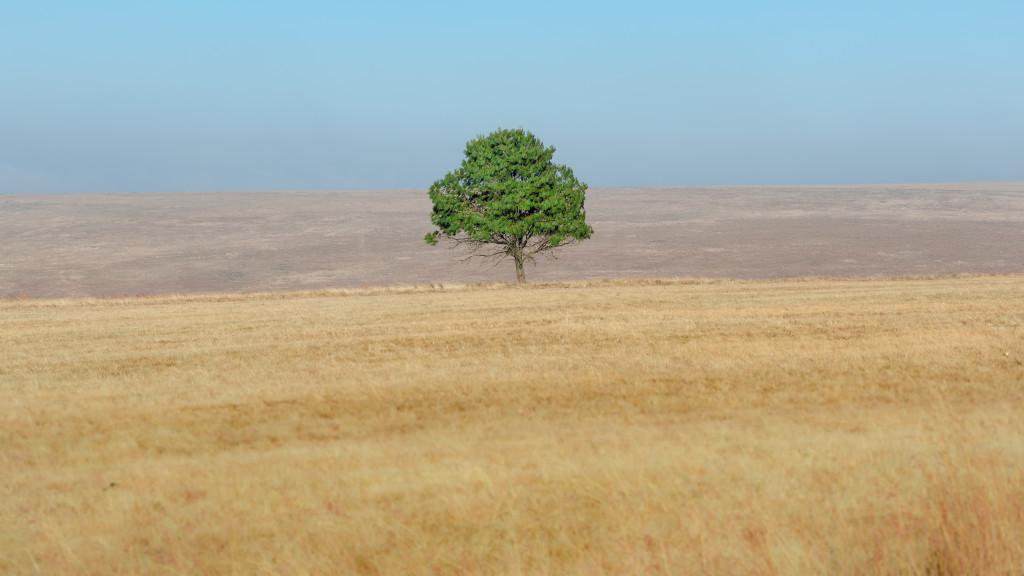 solitary tree, eksteen jacobsz, landscape, veld